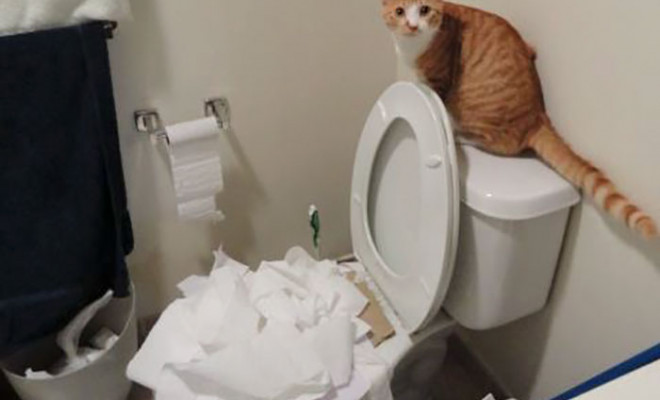 share-the-mess-your-pets-made-when-you-left-them-alone-96-58ee30608f9a1_700