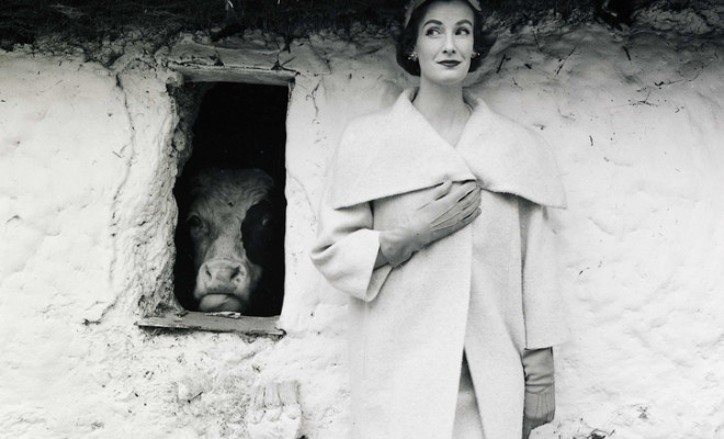 wenda-and-the-cow_-1954